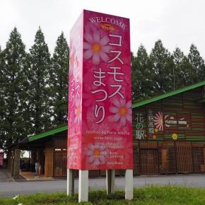 生駒高原 コスモス祭りサイン
